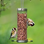guide on summer bird feeding