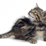 common health issues in cats