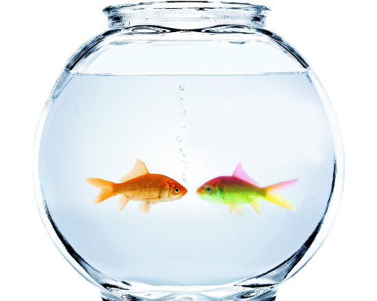 Some Amazing Ways To Take Care Of Your Pet Fish The Pets