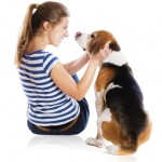 ways to train your dog for a dog show
