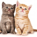 cat health kidney disease