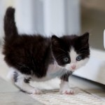how to feed and care for orphaned kittens