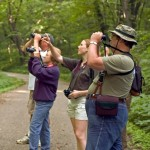 tips for successful bird watching