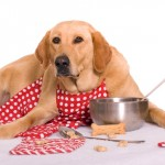 tips to keep pet food and bowls free from bugs