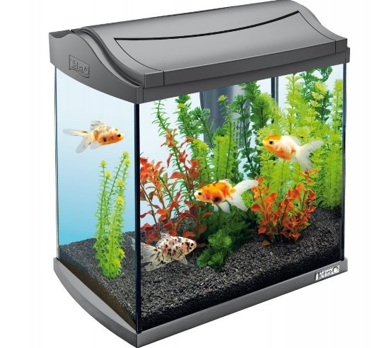essential fish tank supplies