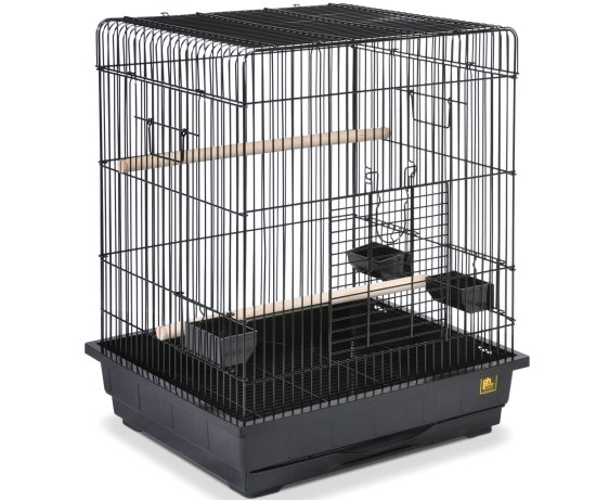 planning to buy a parrot bird cage