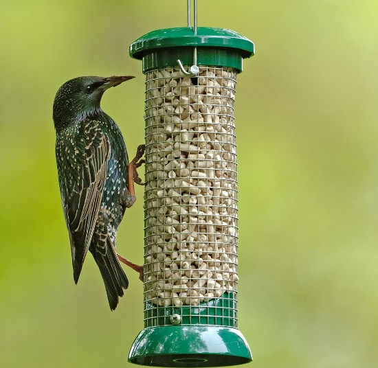 homemade bird food recipes