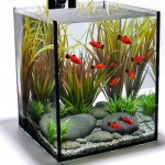 ways to prepare your aquarium for your vacation