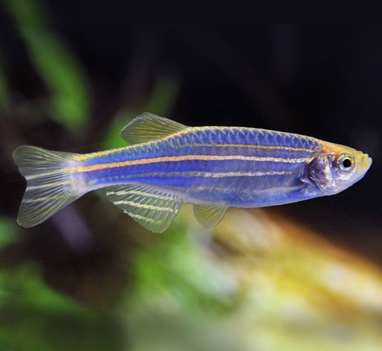 5 best pet fish varieties for kids to keep the pets central for Best fish to have as pets