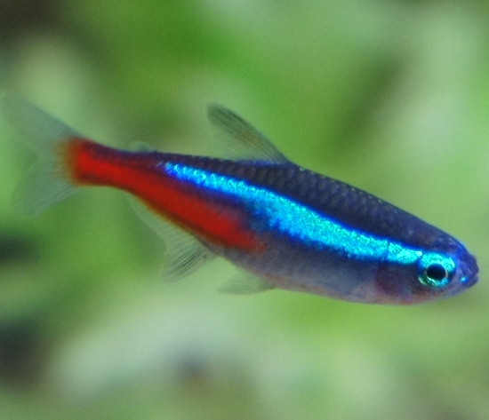 Best Pet Fish Varieties for Kids to Keep