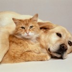 tips for introducing your cat to your new dog