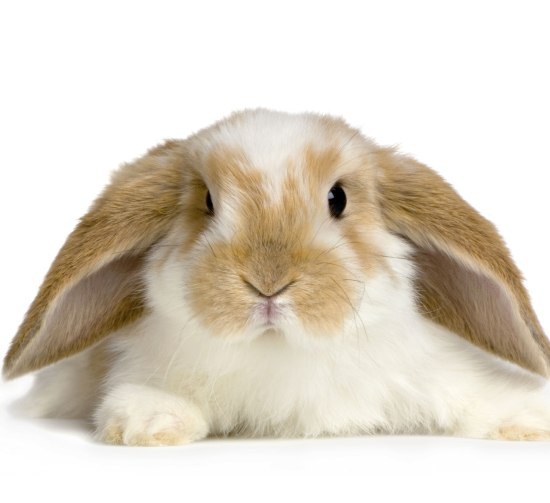 favourite rabbit foods you must try