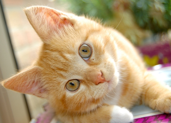 hot spots in cats symptoms and treatment