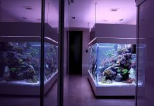 Tips for Setting Salt Water Fish Tank
