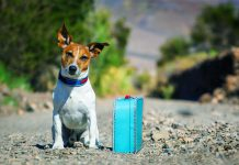 3 Tips to Deal with your Dog if you have Urgent Travel Plans