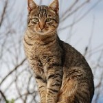 Tabby Cat: Some Interesting Facts