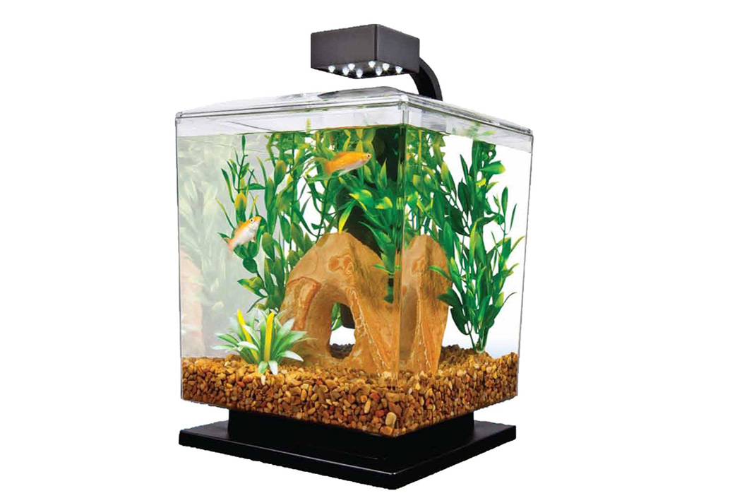 fish tank gadgets every aquarium owner must have
