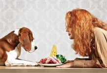 10 people foods that should not be given to pets