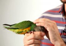 5 Facts about Parrot-petting you should know