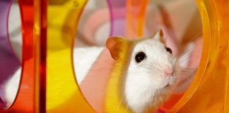 4 Basics of Hamster Trick Training