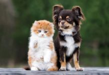 Cats vs Dogs, Which one to Prefer?