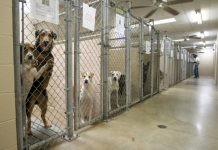 Choosing the Right Shelter for Your Pet