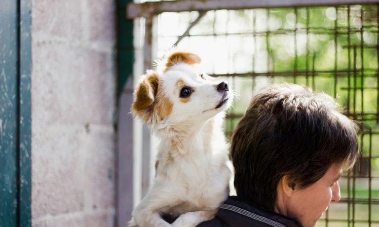 7 Myths About Animal Shelters You Should Reject