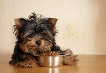 How to Find Quality Food for Your Pet?
