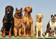Top 6 Dog Breeds You Can Keep in a Small House