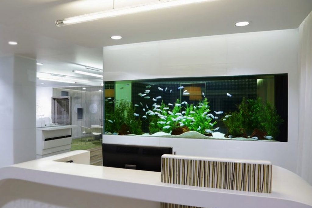 How to maintain your fish aquarium with changing seasons for How to keep fish tank clean without changing water