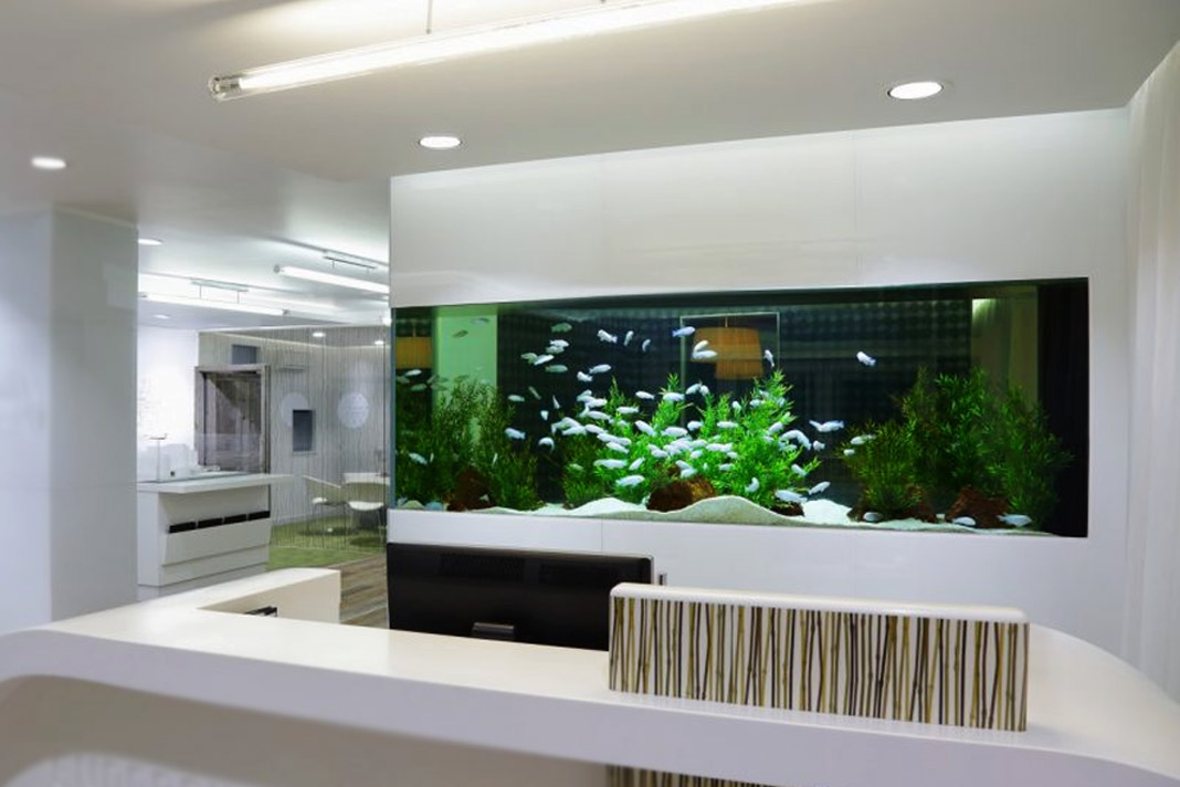 How to maintain your fish aquarium with changing seasons for How to maintain fish tank