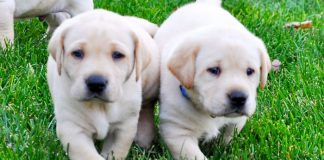 21 Things to Know Before Getting a Dog