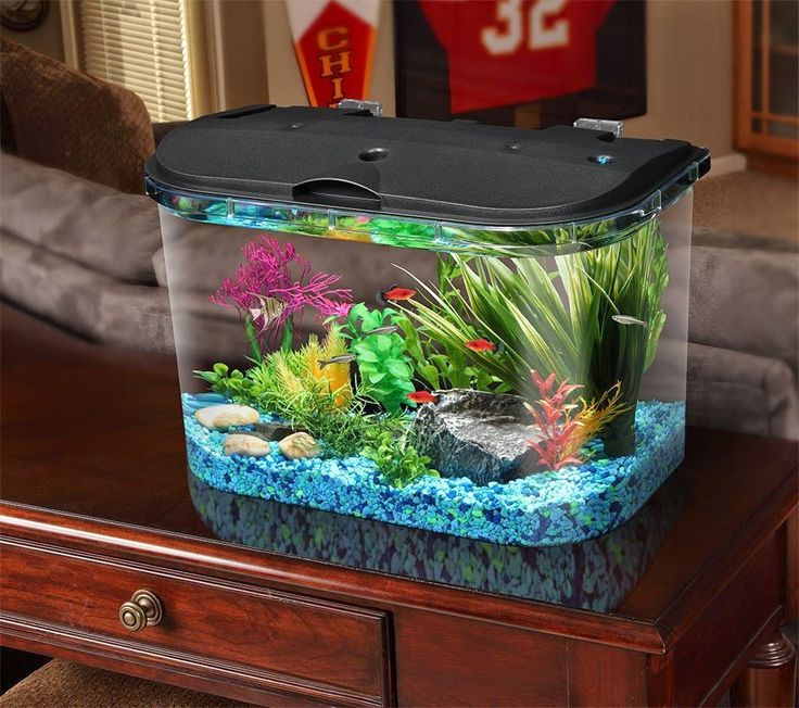 4 Things to Know Before Buying An Aquarium