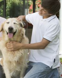 pets care grooming