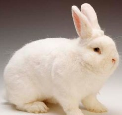 Pet Rabbits In A House Or Apartment The Pets Central