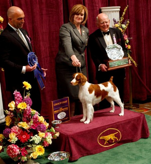 America S Premier Dog Show Hosts 3 New Breeds 25 Pics