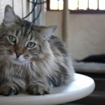 outdoor for cats 1