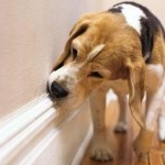 dogs sniff 1