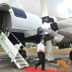 flying with pets 2