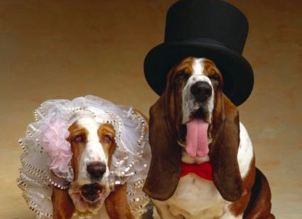 pet wedding