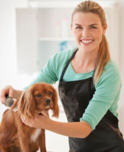 Dogs Hair Care