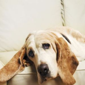 Dog Cancer Symptoms