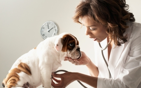 10 Most Common Dog Diseases