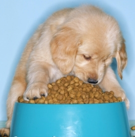 Dog Nutrition Facts