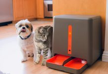 How to Choose the Best Automatic Pet Feeder