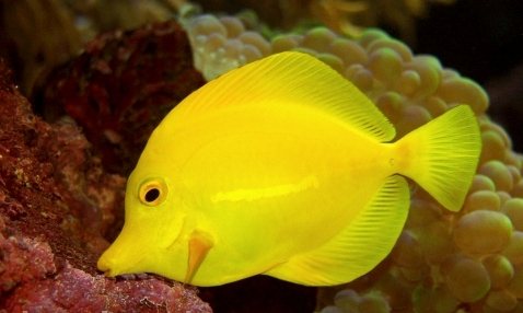 Types of Tropical Fish Diseases