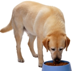 What Is a Natural Dog Diet