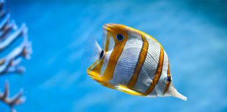 50 Best Tropical Fishes for Your Aquarium
