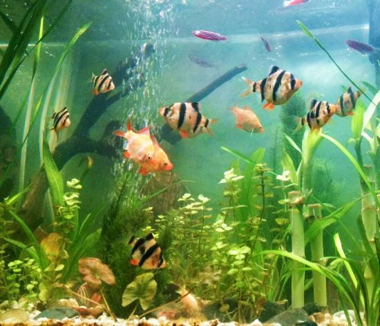 common fish keeping mistakes and how to deal with them
