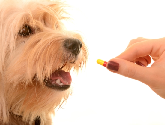 pointers to keep in mind while buying pet drugs online